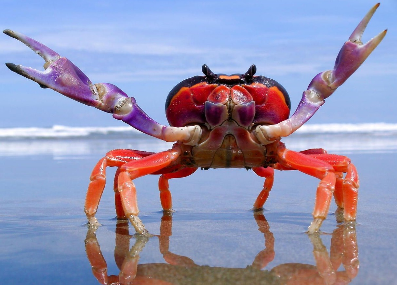 Halloween moon crab on the beach